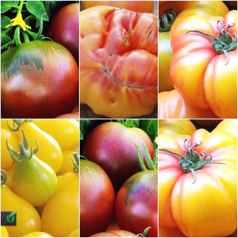 tomaten mix 4 arten je 20 samen von alten sorten tropical seeds. Black Bedroom Furniture Sets. Home Design Ideas