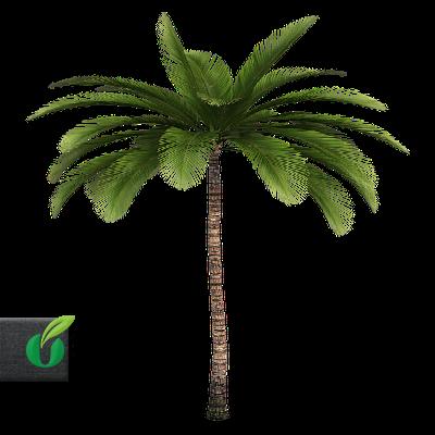 Palmen / Bananen